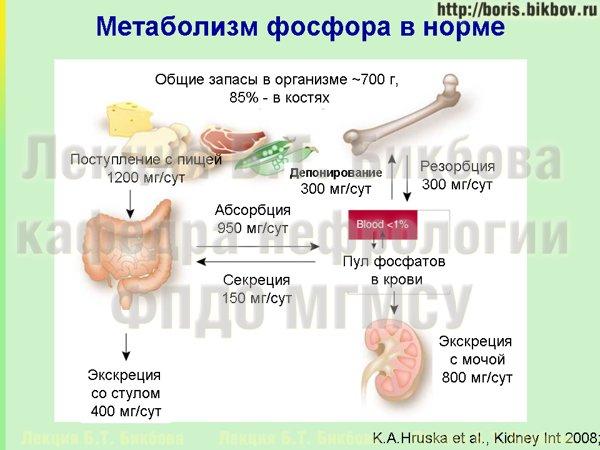 Схема метаболизма фосфатов в организме