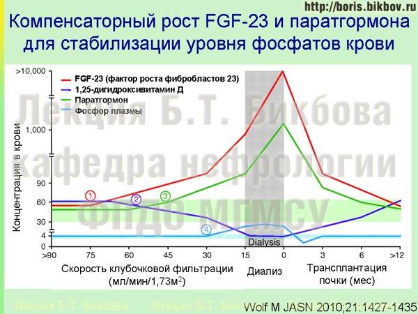 Компенсаторный рост фактора роста фибробластов 23 и паратгормона для стабилизации уровня фосфатов крови при хронической болезни почек